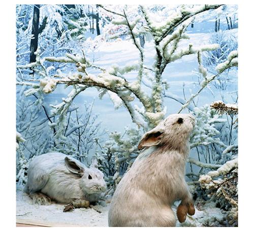 Gv_bunnies_a_1